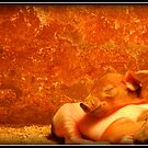Let sleeping pigs lie. by Tigersoul