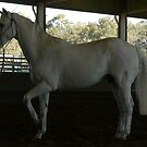 Andalusian gelding by louisegreen