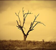 Lone Tree by Alison Hill