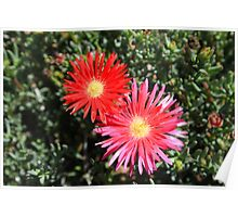 Pink and Red Flower in a Garden Poster
