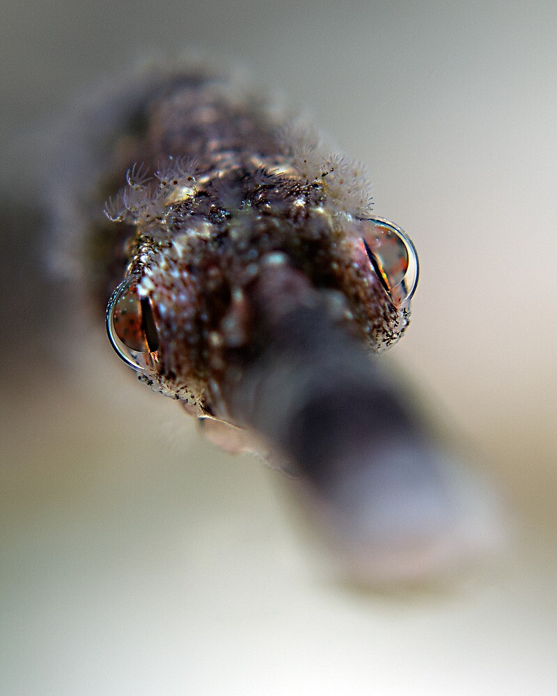 Pipefish Portrait by Henry Jager