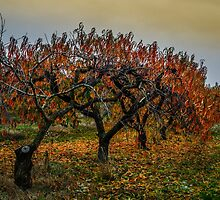Fall Colors #234321 by Charles & Patricia   Harkins ~ Picture Oregon