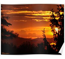 Spruce Silhouette on Gilt Sunset Poster