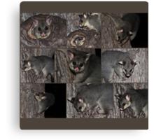 Possum Collection Canvas Print