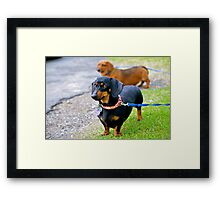 My little black dog! Framed Print