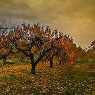 Fall Colors #66756 by Charles & Patricia   Harkins ~ Picture Oregon