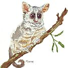 Pippin, the Bush baby by Maree Clarkson