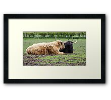 HIGHLAND COWS . Framed Print