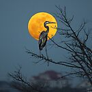 Super Moon and Great Blue Heron by Photography by TJ Baccari