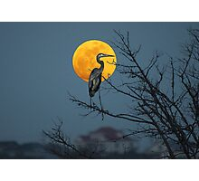Super Moon and Great Blue Heron Photographic Print