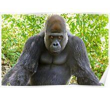Gorilla 01 Poster