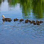 duck's  by Scott Ferguson