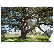 St. Joseph Plantation Oak Poster