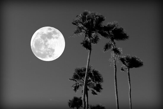 Palm Trees and the Supermoon by AuntDot