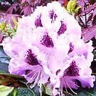 Purple Rain by cschurch