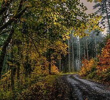 Back Roads #442113 by Charles & Patricia   Harkins ~ Picture Oregon