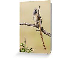 Mousebird Greeting Card