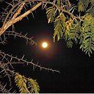 Haloed Super Moon - a thorny issue with Acacia Karroo by Irene  van Vuuren