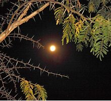 Haloed Super Moon - a thorny issue with Acacia Karroo by Irene  van Vuuren