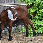 Barnyard Baby by Elaine  Manley