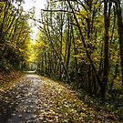 Back Roads #55436 by Charles & Patricia   Harkins ~ Picture Oregon