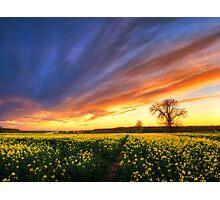 The luminous landscape pt.9. Photographic Print
