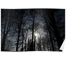 Treelight Poster