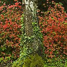 Rhododendron-II. by zolim