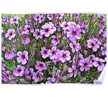 Purple & White Pansies Poster