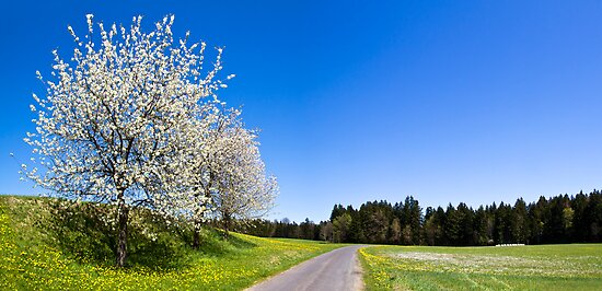 Countryside Spring by Walter Quirtmair
