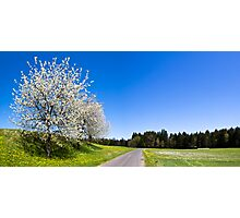 Countryside Spring Photographic Print