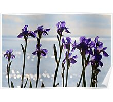 Coastal Irises 2 Poster
