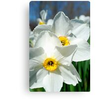 Double Daffodil Fun Canvas Print