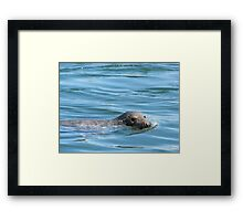 Saturday Afternoon Swim Framed Print