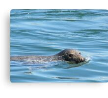 Saturday Afternoon Swim Canvas Print