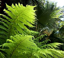 Ferns and Fronds by waddleudo