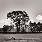Frolick by the Moon by Michael  Dreese