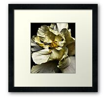 Folding Petals, Hibiscus Framed Print
