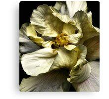 Folding Petals, Hibiscus Canvas Print