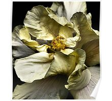 Folding Petals, Hibiscus Poster