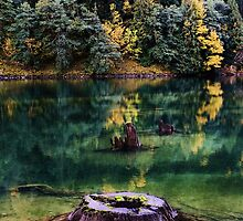 Diablo Lake Stump by benjamphotos