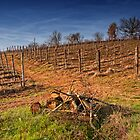 The Vineyard by Kurt Golgart