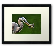 Success And The Great Blue Heron Framed Print