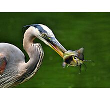 Success And The Great Blue Heron Photographic Print