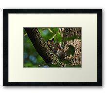 Fox Squirrel Framed Print