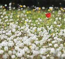 standing out in the crowd.. by JOSEPHMAZZUCCO