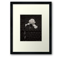 Blooming flower and fence dark image  Framed Print