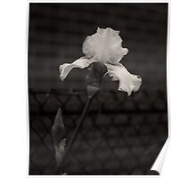 Blooming flower and fence dark image  Poster