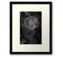 Little Rose black and white blurry background  Framed Print