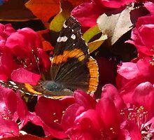 Cherry Blossom pow wow by MarianBendeth